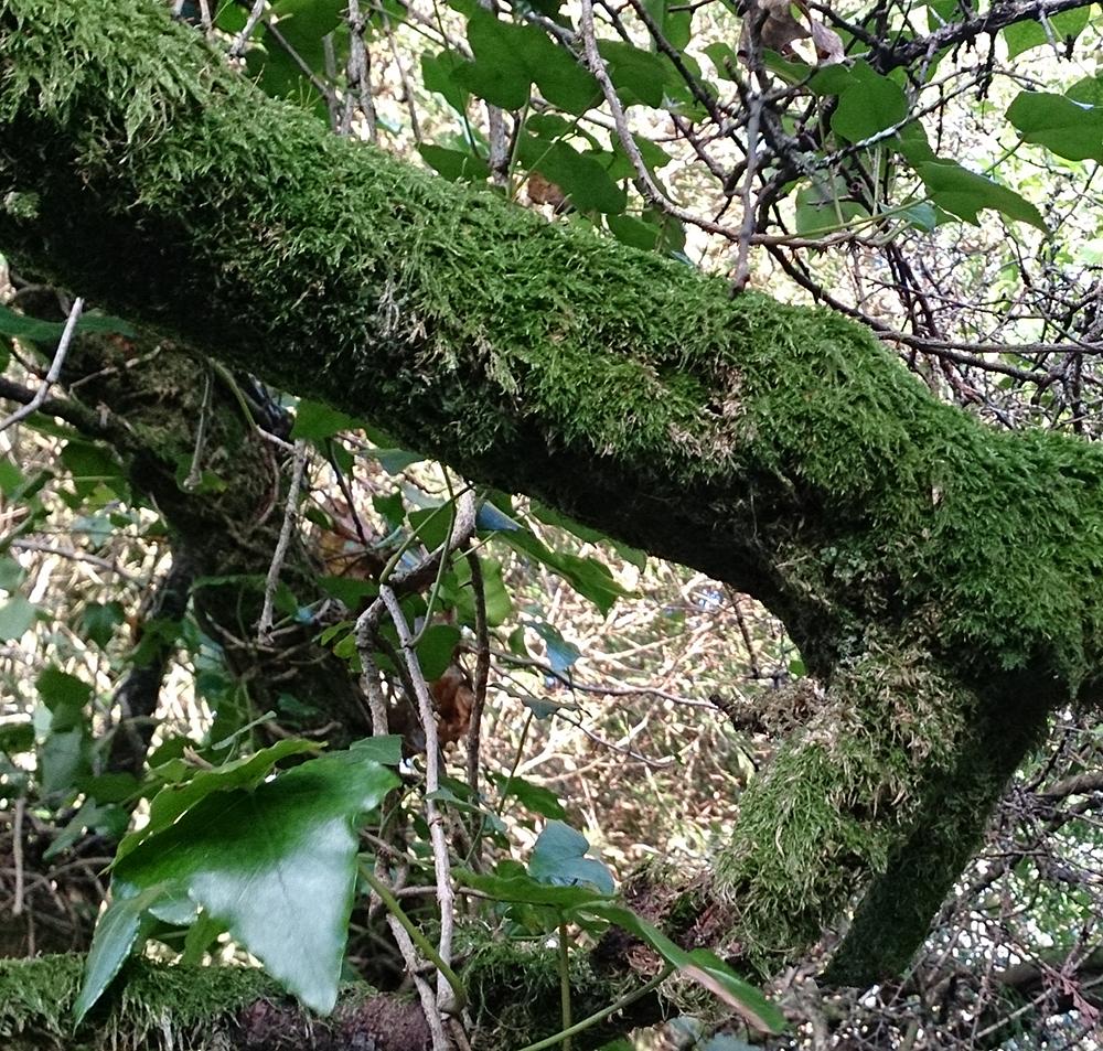 tree_DSC_2118